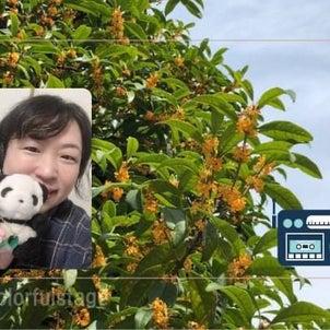次回の「夢を語るラジオ・Dream Canvas」は、9月16日(木)20時から敦賀FMで...の画像
