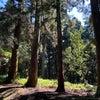 奈良旅プラン(2)~春日原始林で森林浴!の画像