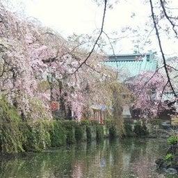 画像 三島大社(静岡県) 参拝ガイド の記事より 4つ目
