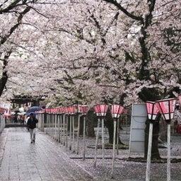 画像 三島大社(静岡県) 参拝ガイド の記事より 2つ目