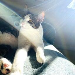 画像 保護猫から教わったこと♪我が家で初めて迎えるバースデー の記事より 7つ目