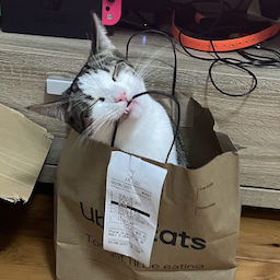 画像 保護猫から教わったこと♪我が家で初めて迎えるバースデー の記事より 1つ目