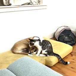 画像 保護猫から教わったこと♪我が家で初めて迎えるバースデー の記事より 4つ目