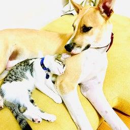 画像 保護猫から教わったこと♪我が家で初めて迎えるバースデー の記事より 6つ目