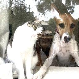 画像 保護猫から教わったこと♪我が家で初めて迎えるバースデー の記事より 3つ目