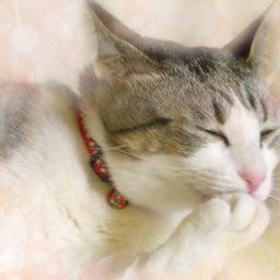 画像 やがて来る、猫の死についての思い の記事より