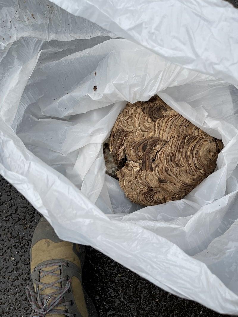 蜂の巣撤去