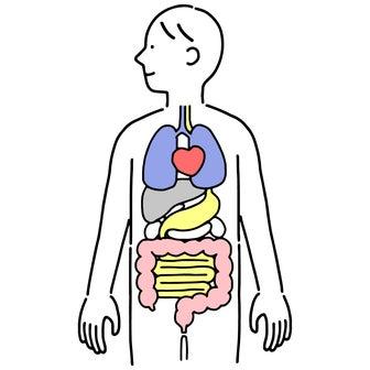 シミと臓器とアロマの関係