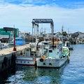 釜揚げしらす丼と岸和田漁港