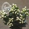 白ヒペリカム「ココウノ」【花屋の花図鑑】の画像