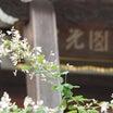 円光禅寺(萩寺)2021年9月11日撮影