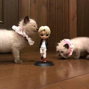 秋の子猫祭り予告の画像