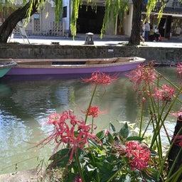 画像 曼珠沙華が咲き、柳が揺れる柳川へ行ってきました。 の記事より 1つ目