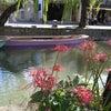 曼珠沙華が咲き、柳が揺れる柳川へ行ってきました。の画像