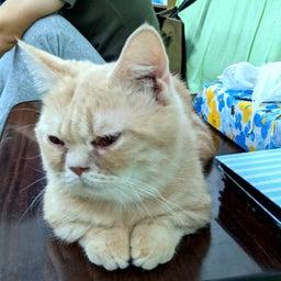 画像 ボランティアさん宅預かり猫ちゃん の記事より 3つ目