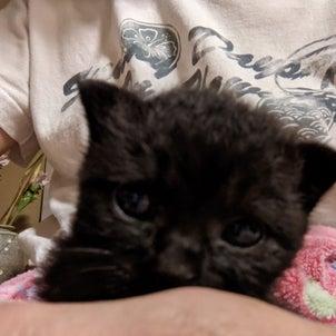 【 黒猫くまちゃん ベアーくん 】の画像