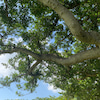 ◆ほんのり日焼けした日、改めて感謝!なサプリの画像