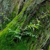 森の精油と*の画像