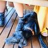 ドッグカフェで、他の方に不快を与えてしまうことの断捨離の画像