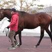 日高地区で今年最も生まれた産駒は?HBA当歳馬名簿