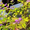 今朝の植物とメダカ達