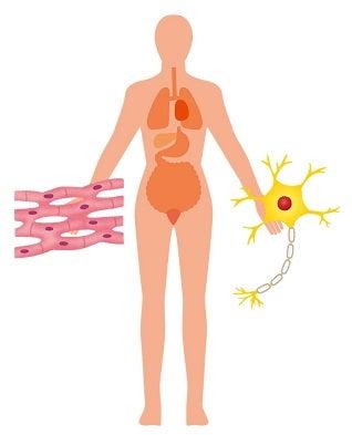 神経細胞・老化