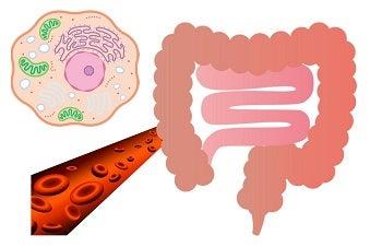 赤血球・神経細胞