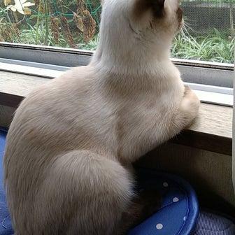 前場、暴落、デイ相場?+猫