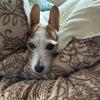今日は愛犬を紹介!の画像