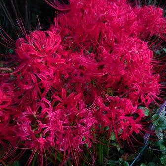 庭の花達〜