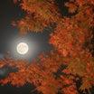 中秋の名月、夜空を見上げて…