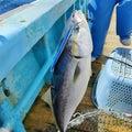 漁師の徒然なるブログ