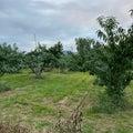 あったか桃農園3