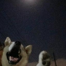 画像 愛犬と中秋の名月♪ の記事より 2つ目
