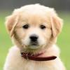銀座のママ【今朝の動画】捨て犬相談が増えています。今朝の動画はこちら高嶋ワンニャン友の会の画像
