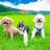 銀座のママ【今朝のうちの子】大分の絶景 内成棚田に行ってきました。パワースポット犬の画像