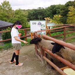 画像 那須りんどう湖ファミリー牧場でキャンプ① の記事より 12つ目
