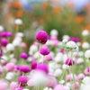 今日の癒し動画 銀座のママ幸せのヒント♡銀座ママ占い【今日のお花】幸せを呼ぶ開運花 高嶋化粧品の画像