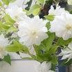 お庭のお花は放置でもキレイ