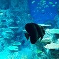足摺海洋館『SATOUMI』