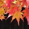 ココから一気に駆け抜ける!秋分の日✨の画像