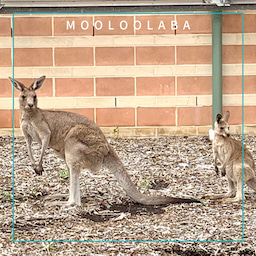 画像 オーストラリアで職人系のお仕事GET! の記事より 3つ目