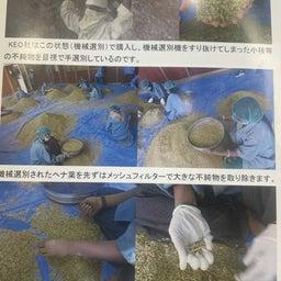 画像 #ヘナ #自家製ヘナ #ヘナの刈り取り #乾燥 #製粉 #100メッシュ #ふるいにかける の記事より 9つ目