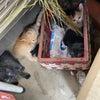 仔猫6兄妹の画像