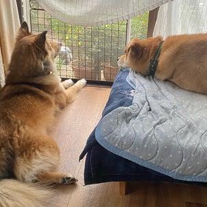 犬がガジュマルを遊びに誘うとの画像