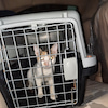 TNR どんどん増える子猫達の画像