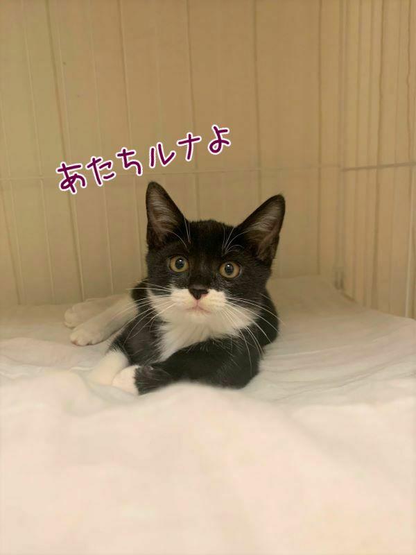 黒白猫ルナちゃんの画像
