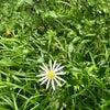 野草を知るの画像