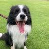 【犬と暮らす】散歩のすすめの画像
