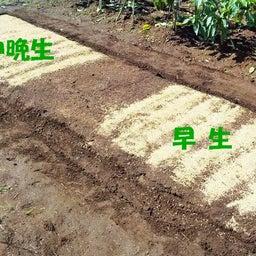 画像 玉ねぎの種まき〜発芽!モロッコインゲン収穫! の記事より 4つ目